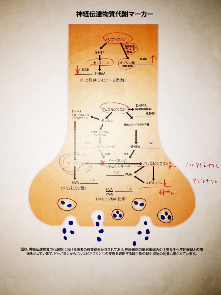 神経伝達物質代謝マーカー | トゥレット当事者会